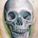 48_skull_mattcellis