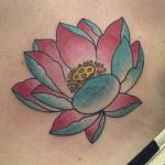 55_lotus_mattcelli