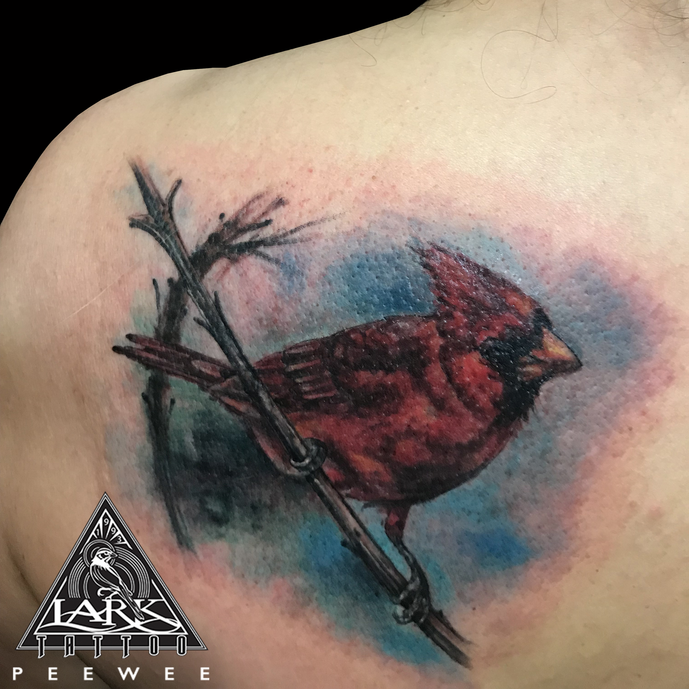 #colortattoo #bird #birdtattoo #cardinal #cardinaltattoo #animaltattoo #nature #naturetattoo #tattoo #tattoos #tat #tats #tatts #tatted #tattedup #tattoist #tattooed #inked #inkedup #ink #tattoooftheday #amazingink #bodyart #tattooig #tattoosofinstagram #instatats #larktattoo #larktattoos #larktattoowestbury #westbury #longisland #NY #NewYork #usa #art #peewee #peeweetattoo