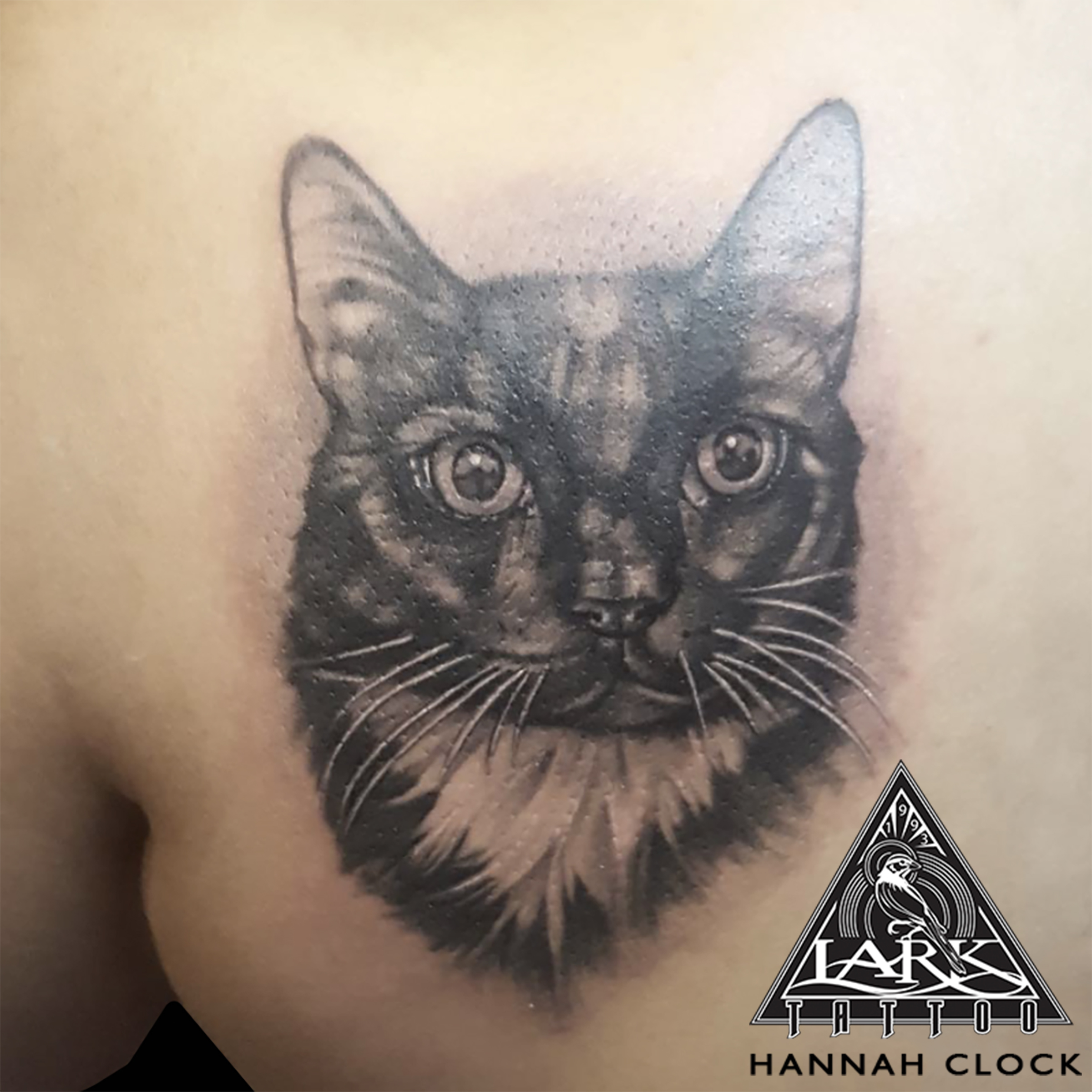 #cat #CatTattoo #Cattoo #blackandgreytattoo #blackandgraytattoo #pettattoo #animaltattoo #tattoo #tattoos #tat #tats #tatts #tatted #tattedup #tattoist #tattooed #inked #inkedup #ink #tattoooftheday #amazingink #bodyart #tattooig #tattoosofinstagram #instatats #larktattoo #larktattoos #larktattoowestbury #westbury #longisland #NY #NewYork #usa #art