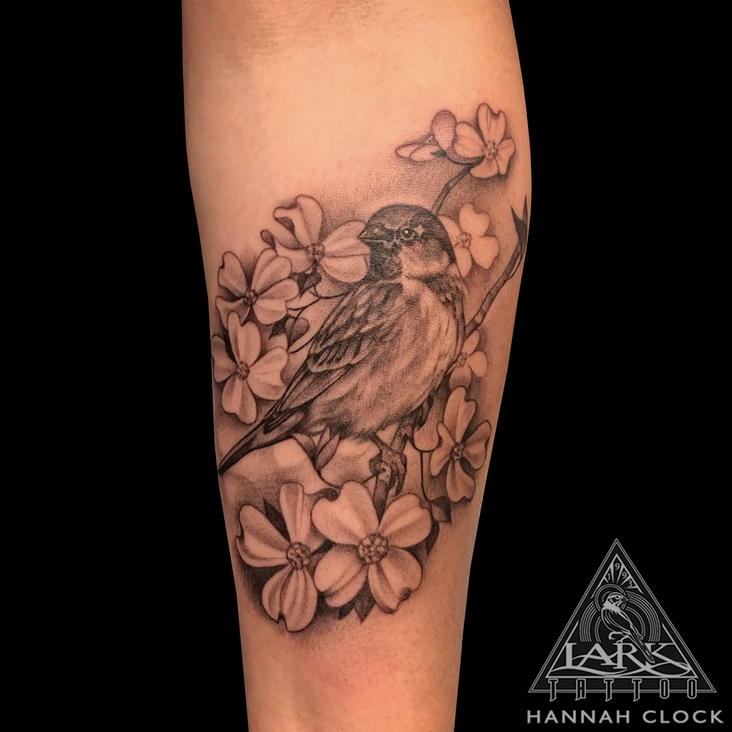 Birdie, BirdieTattoo, Sparrow, SparrowTattoo, FemaleTattooer, FemaleArtist, FemaleTattooArtist, LadyTattooer, Dogwood, DogwoodTattoo, BNG, BNGTattoo, BlackAndGrey, BlackAndGreyTattoo, BlackAndGray, BlackAndGrayTattoo, Flower, FlowerTattoo, Forearm, ForearmTattoo, Floral, FloralTattoo, Bird, BirdTattoo, Nature, NatureTattoo, Animal, AnimalTattoo, FeminineTattoo, LarkTattoo, Tattoo, Tattoos , TattooArtist, Tattoist, Tattooer, LongIslandTattooArtist, LongIslandTattooer, LongIslandTattoo, TattooOfTheDay, Tat, Tats, Tatts, Tatted, Inked, Ink, TattooInk, AmazingInk, AmazingTattoo, BodyArt, LarkTattooWestbury, Westbury, LongIsland, NY, NewYork, USA, Art, Tattedup, InkedUp, LarkTattoos