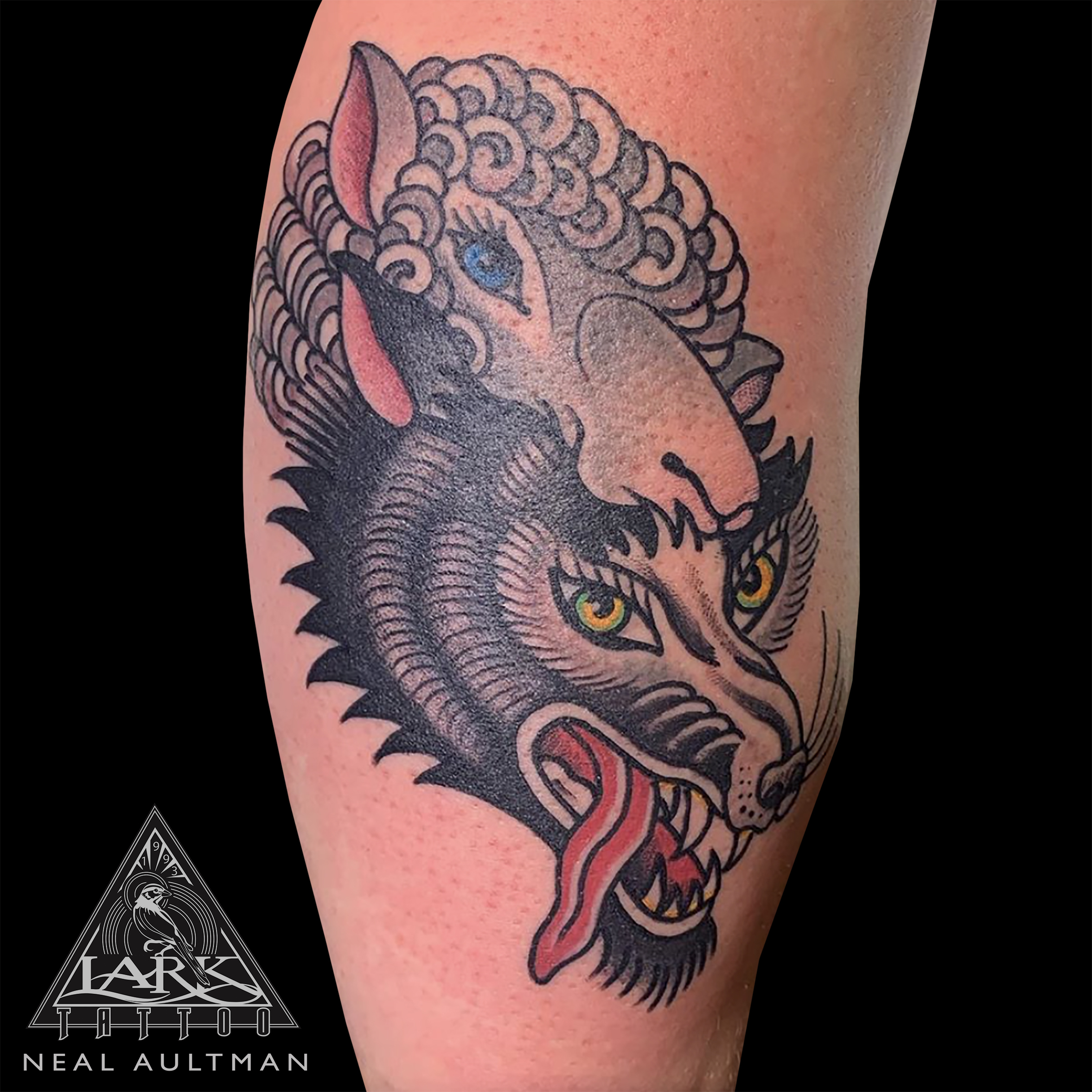 LarkTattoo, Tattoo, Tattoos, ColorTattoo, Traditional, TraditionalTattoo, ColorTraditional, TraditionalTattooer, TraditionalTattooers, TraditionalTattooArtist, TraditionalTattooArtists, ColorTraditionalTattoo, Animal, AnimalTattoo, Wolf, WolfTattoo, WolfInSheepsClothing, WolfInSheepsClothingTattoo, BreakfastClubTattoo, BreakfastClubTattooBook, BreakfastClubTraditiionalTattoo, BreakfastClubTraditiionalTattoos, TattooArtist, Tattoist, Tattooer, LongIslandTattooArtist, LongIslandTattooer, LongIslandTattoo, TattooOfTheDay, Tat, Tats, Tatts, Tatted, Inked, Ink, TattooInk, AmazingInk, AmazingTattoo, BodyArt, LarkTattooWestbury, Westbury, LongIsland, NY, NewYork, USA, Art, Tattedup, InkedUp, LarkTattoos