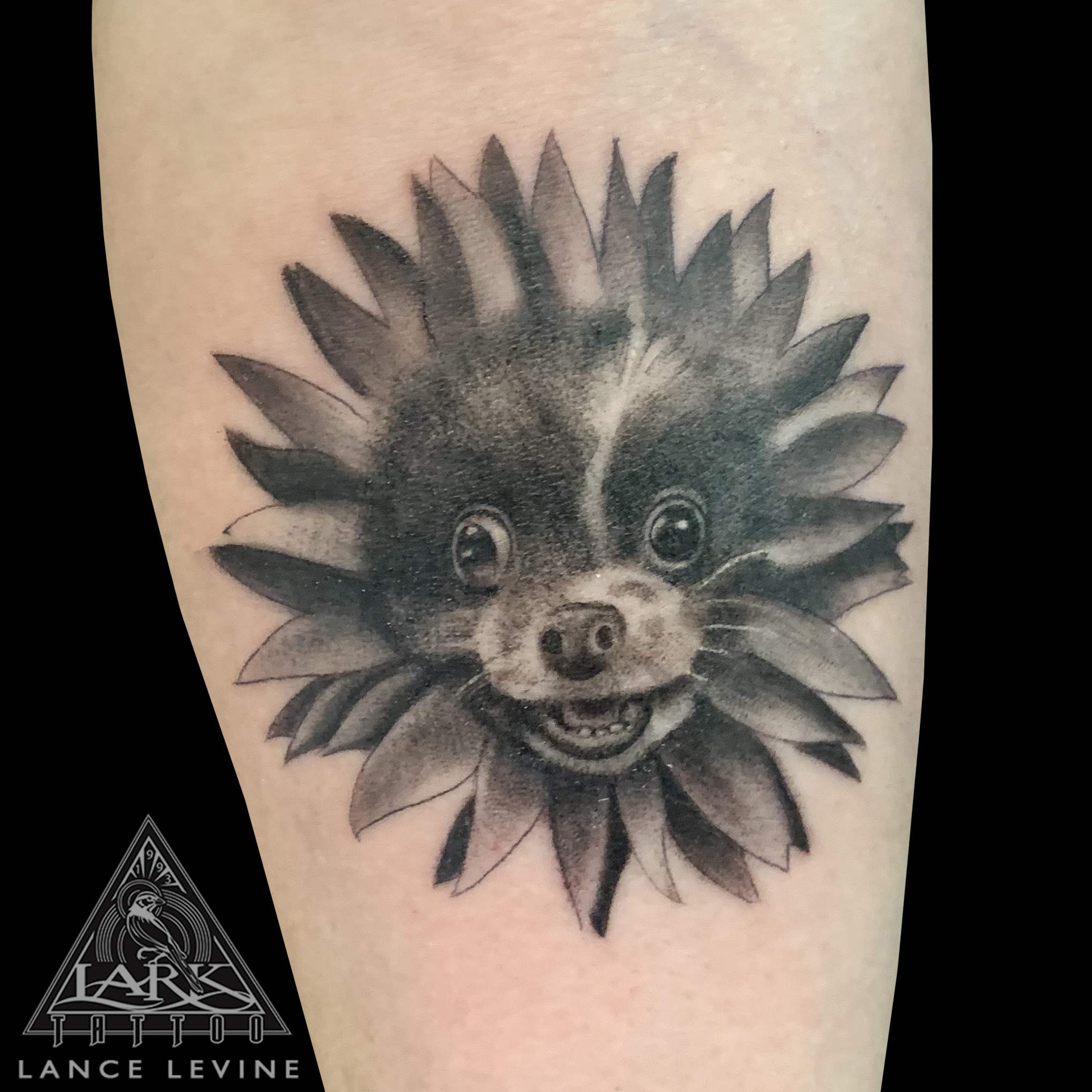 LarkTattoo, Tattoo, Tattoos, LongIslandTattooArtist, Tattooer, LongIslandTattooer, LongIslandTattoo , TattooArtist, Tattoist, BNG, BNGTattoo, BlackAndGrey, BlackAndGreyTattoo, BlackAndGray, BlackAndGrayTattoo, Pet, PetTattoo, Dog, DogTattoo, PeTattoo, Tribute, TributeTattoo, Memorial, MemorialTattoo, FurBaby, FurBabyTattoo, Flower, FlowerTattoo, Cute, CuteTattoo, PetPortrait, PetPortraitTattoo, Realism, RealismTattoo, Realistic, RealisticTattoo, TattooOfTheDay, Tat, Tats, Tatts, Tatted, Inked, Ink, TattooInk, AmazingInk, AmazingTattoo, BodyArt, LarkTattooWestbury, Westbury, LongIsland, NY, NewYork, USA, Art, Tattedup, InkedUp, LarkTattoos