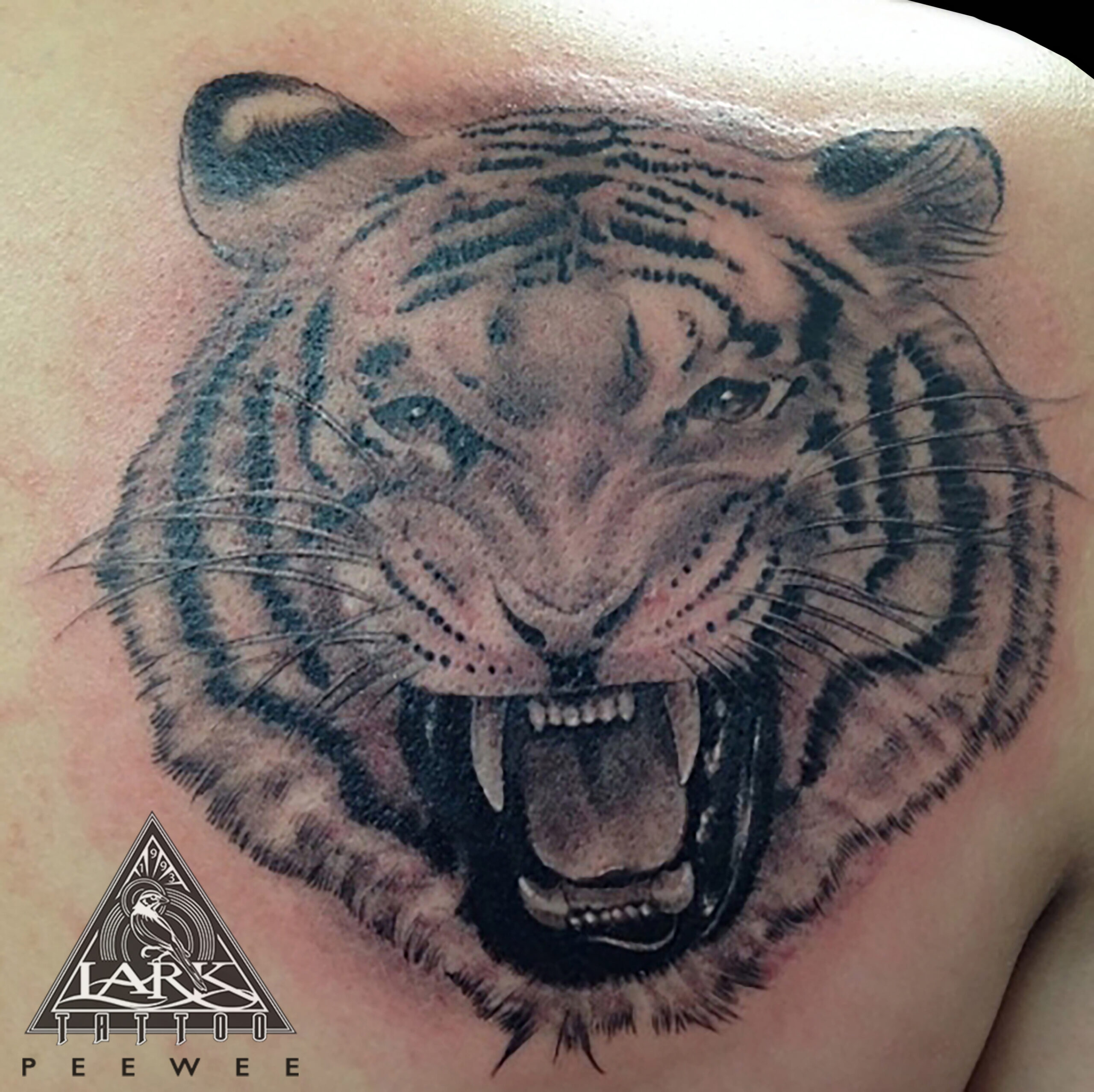 #LarkTattoo #PeeWee #PeeWeeTattoo #PeeWeeLarkTattoo #BNG #BNGTattoo #BlackAndGray #BlackAndGrayTattoo #BlackAndGrey #BlackAndGreyTattoo #Realism #RealismTattoo #Realistic #RealisticTattoo #Animal #AnimalTattoo #Tiger #TigerTattoo #Tattoo #Tattoos #TattooArtist #Tattoist #Tattooer #LongIslandTattooArtist #LongIslandTattooer #LongIslandTattoo #TattooOfTheDay #Tat #Tats #Tatts #Tatted #Inked #Ink #TattooInk #AmazingInk #AmazingTattoo #BodyArt #LarkTattooWestbury #Westbury #LongIsland #NY #NewYork #USA #Art #Tattedup #InkedUp #LarkTattoos
